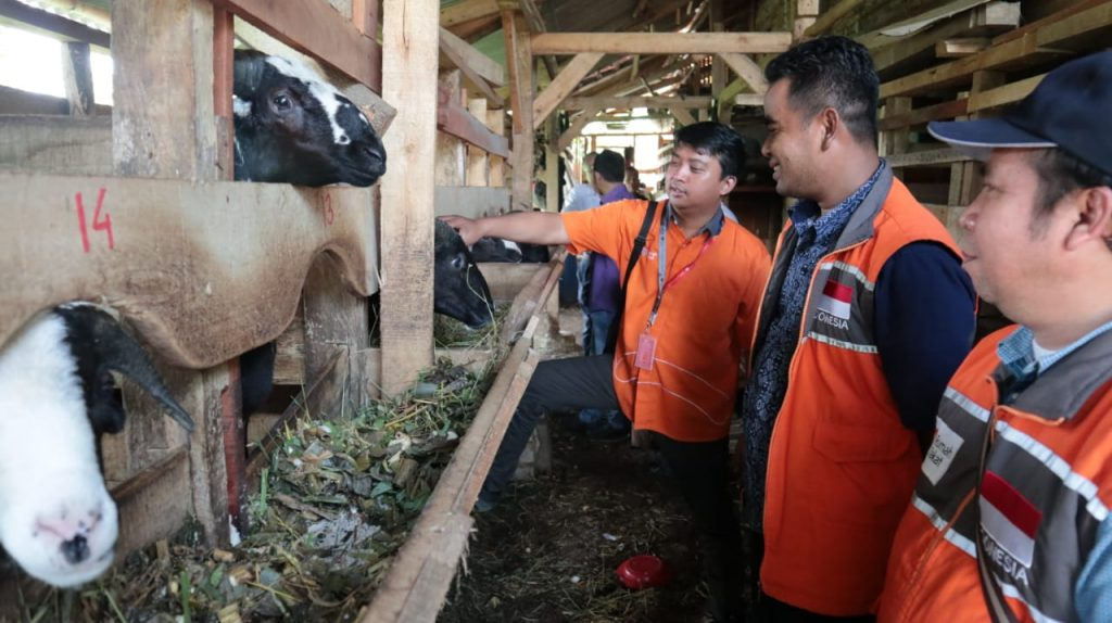 BUMMAS Sangkan Hurip Mampu Berdayakan Peternakan Domba10